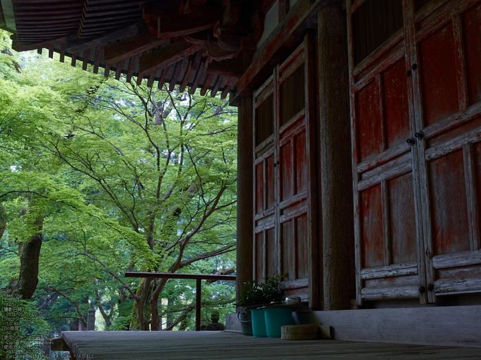 室生寺の石楠花_2013yaotomi_17s.jpg
