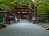 室生寺の石楠花_2013yaotomi_5s.jpg