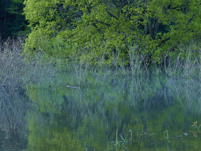 室生湖の新緑_2013yaotomi_103s.jpg