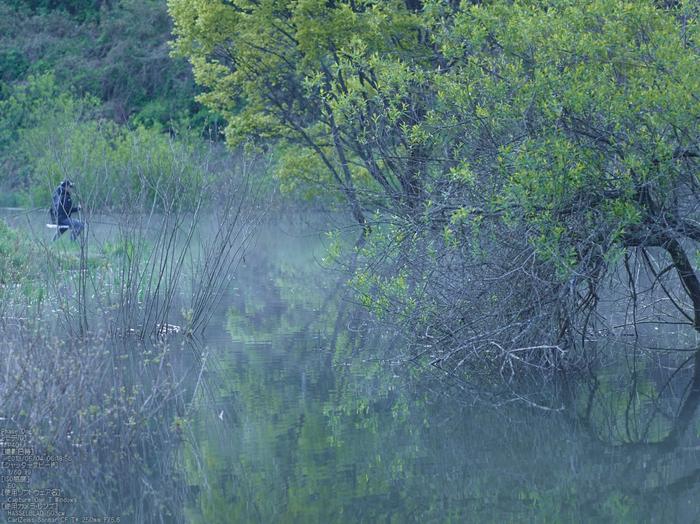 室生湖の新緑_2013yaotomi_105s.jpg