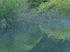 室生湖の新緑_2013yaotomi_106f.jpg