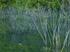 室生湖の新緑_2013yaotomi_108f.jpg
