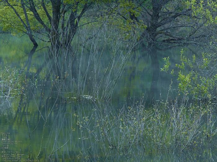 室生湖の新緑_2013yaotomi_111s.jpg
