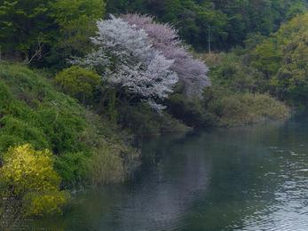 室生湖の新緑_2013yaotomi_11s.jpg