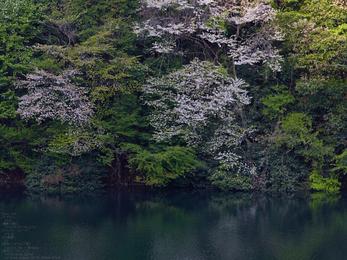 室生湖の新緑_2013yaotomi_7s.jpg