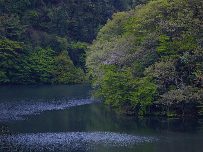 室生湖の新緑_2013yaotomi_8s.jpg
