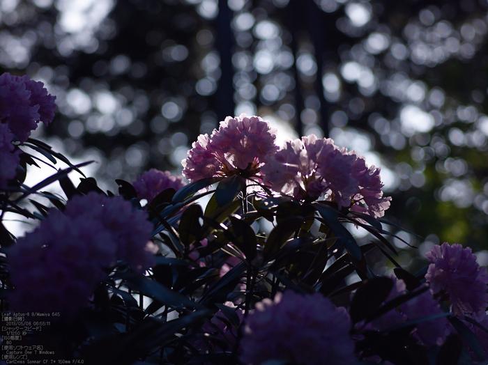 弁財天石楠花の丘_LeafAptusII8_2013yaotomi_16s.jpg