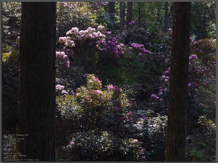 弁財天石楠花の丘_LeafAptusII8_2013yaotomi_1st.jpg