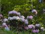 弁財天石楠花の丘_LeafAptusII8_2013yaotomi_22f.jpg