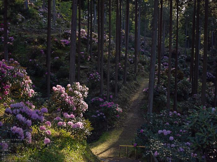 弁財天石楠花の丘_LeafAptusII8_2013yaotomi_5s.jpg