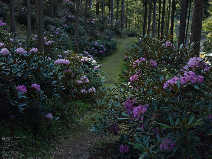 弁財天石楠花の丘_LeafAptusII8_2013yaotomi_7s.jpg