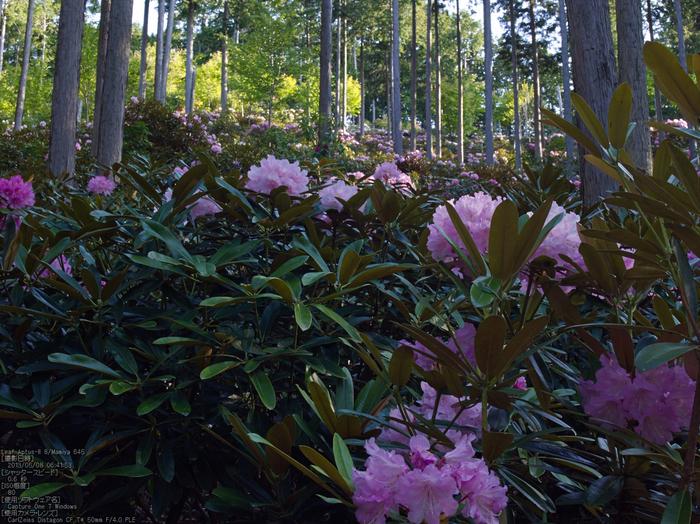 弁財天石楠花の丘_LeafAptusII8_2013yaotomi_8s.jpg