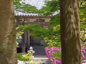 長岳寺のツツジ_2013yaotomi_17s.jpg