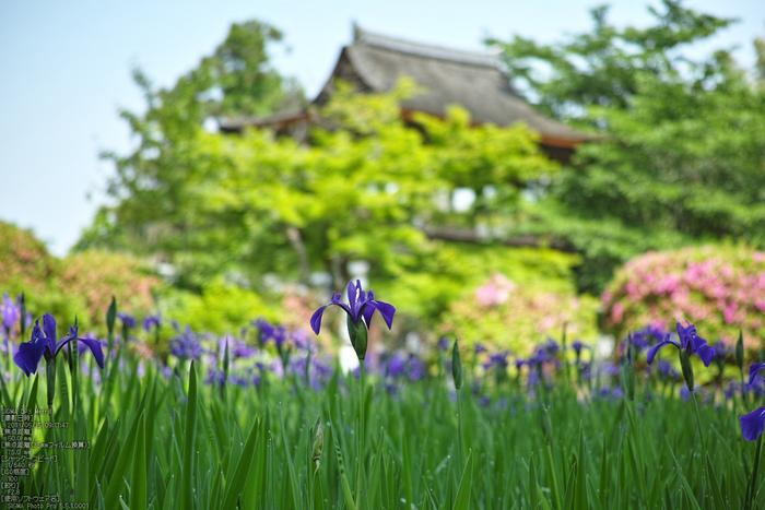 長岳寺の杜若_DP1m_2013yaotomi_15s.jpg