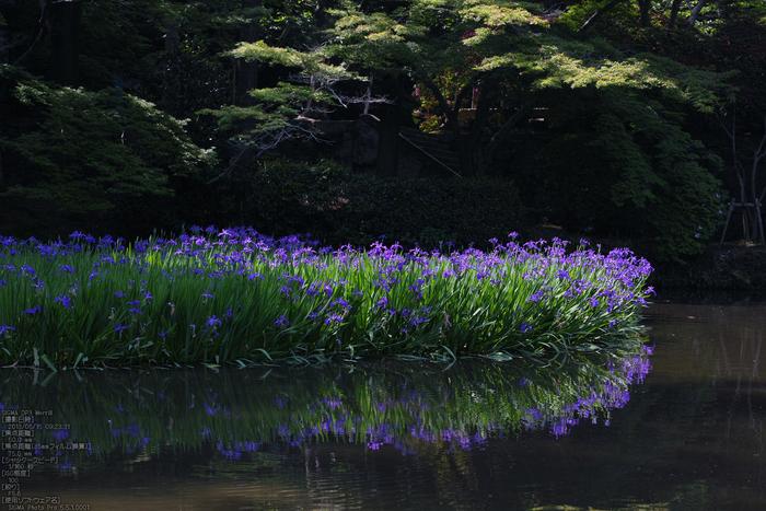 長岳寺の杜若_DP1m_2013yaotomi_20s.jpg