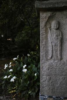 長岳寺の杜若_DP1m_2013yaotomi_21s.jpg