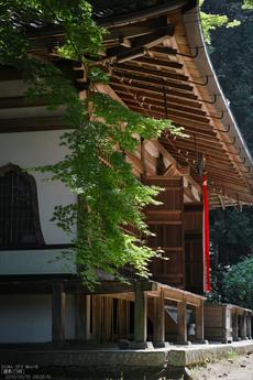 長岳寺の杜若_DP1m_2013yaotomi_23s.jpg