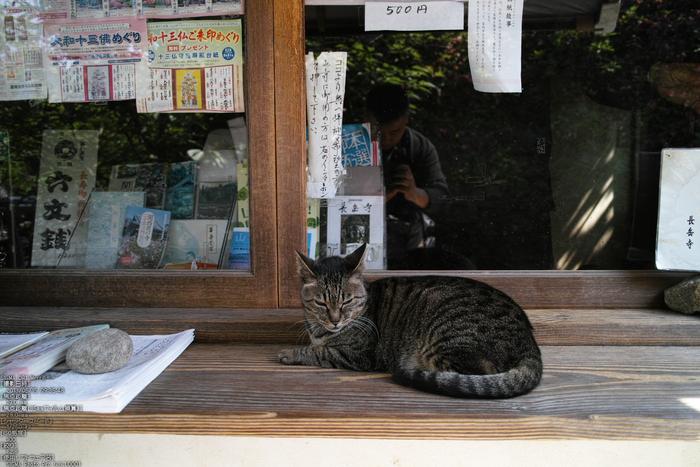 長岳寺の杜若_DP1m_2013yaotomi_28s.jpg