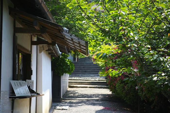 長岳寺の杜若_DP1m_2013yaotomi_30s.jpg
