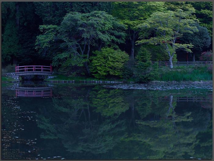 鳥見山のツツジ_2013yaotomi_1st.jpg