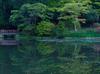 鳥見山のツツジ_2013yaotomi_1szz.jpg