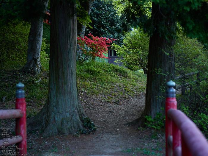 鳥見山のツツジ_2013yaotomi_8s.jpg