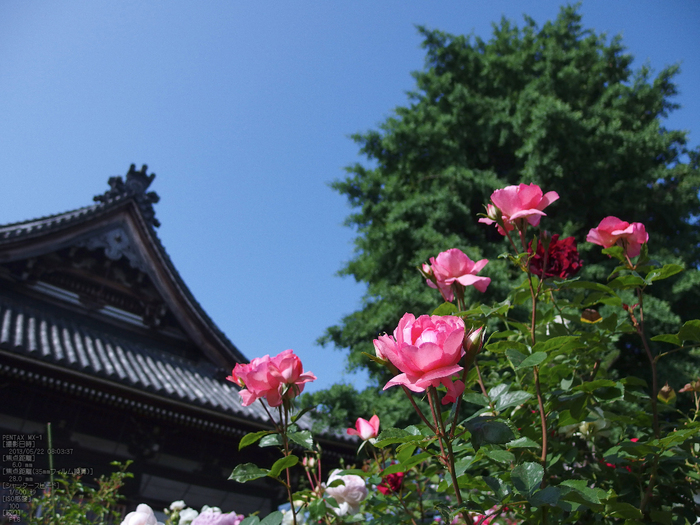 おふさ観音の薔薇_2013yaotomi_12s.jpg