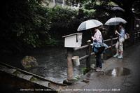 天の真名井の6月_2013yaotomi_11s.jpg