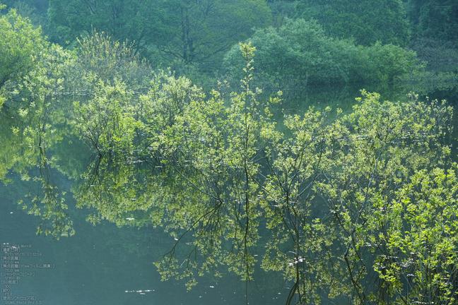 室生湖_20130515yaotomi_11s.jpg