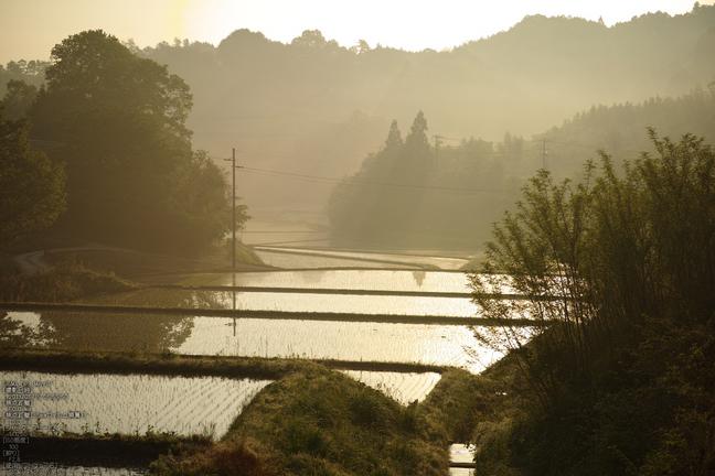 山添村茶畑_2013yaotomi_2s.jpg