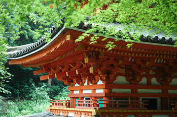 岩船寺の紫陽花_2013yaotomi_15s.jpg