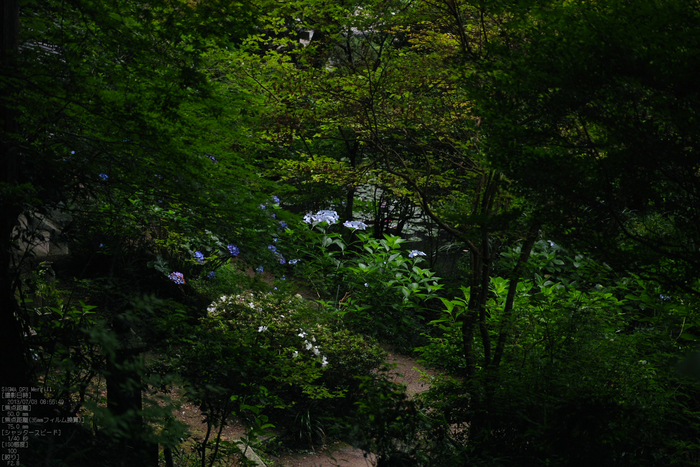 岩船寺の紫陽花_2013yaotomi_16s.jpg