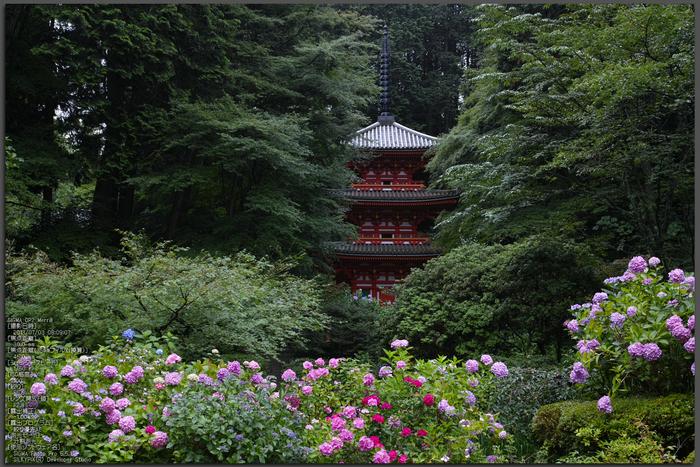 岩船寺の紫陽花_2013yaotomi_1st.jpg