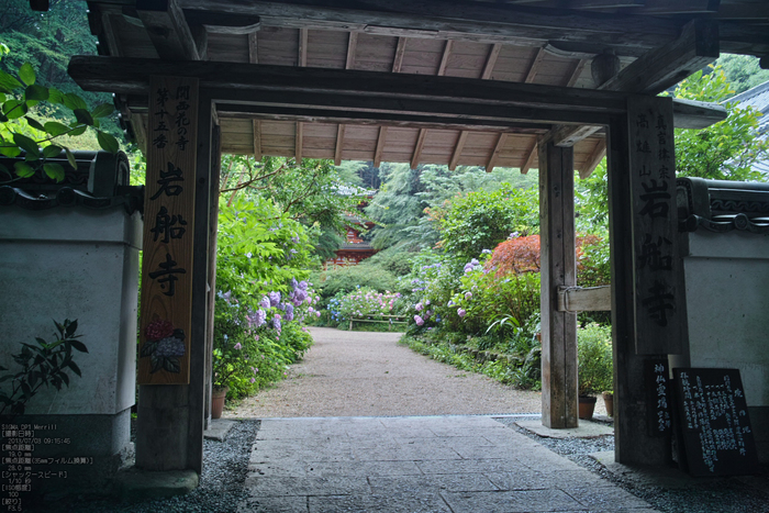 岩船寺の紫陽花_2013yaotomi_23s.jpg