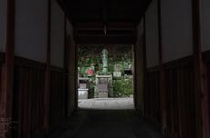 柳谷観音の紫陽花_2013yaotomi_18s.jpg