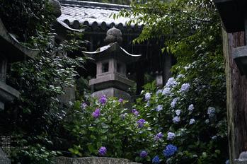 長谷寺の紫陽花_2013yaotomi_10s.jpg