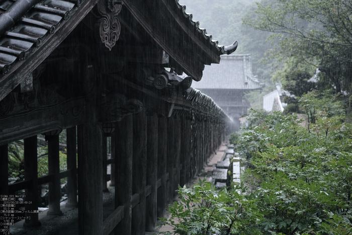 長谷寺の紫陽花_2013yaotomi_16s.jpg