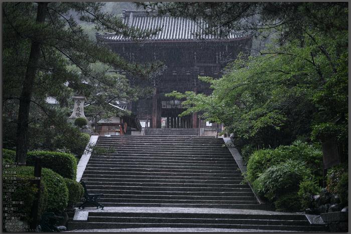 長谷寺の紫陽花_2013yaotomi_1st.jpg