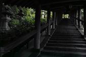 長谷寺の紫陽花_2013yaotomi_20s.jpg