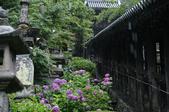 長谷寺の紫陽花_2013yaotomi_21s.jpg