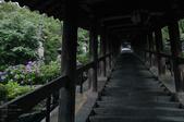 長谷寺の紫陽花_2013yaotomi_22s.jpg
