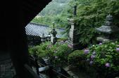 長谷寺の紫陽花_2013yaotomi_23s.jpg
