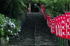 長谷寺の紫陽花_2013yaotomi_36s.jpg