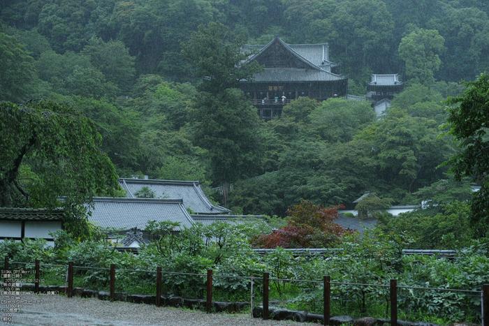 長谷寺の紫陽花_2013yaotomi_50s.jpg