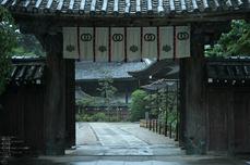 長谷寺の紫陽花_2013yaotomi_51s.jpg