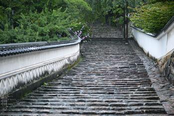 長谷寺の紫陽花_2013yaotomi_6.s.jpg