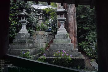 長谷寺の紫陽花_2013yaotomi_8s.jpg