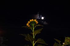 FUJIFILM,X-M1_16-50kit_review,2013yaotomi_夜景_13s.jpg