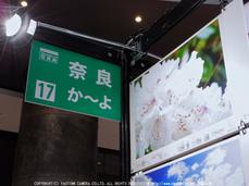 30000人の写真展,大阪_2013yaotomi_8s.jpg