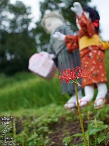 明日香,稲渕_かかし_2s.jpg
